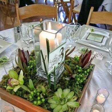 casamento_decoracao_sem_flores_suculentas_01