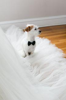 casamento_animais_estimacao_cachorro_01