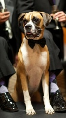 casamento_animais_estimacao_cachorro_02