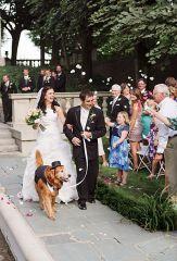 casamento_animais_estimacao_cachorro_03