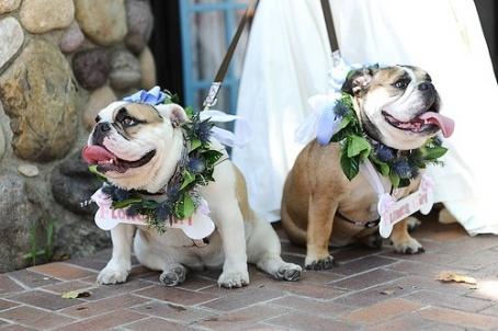 casamento_animais_estimacao_cachorro_05