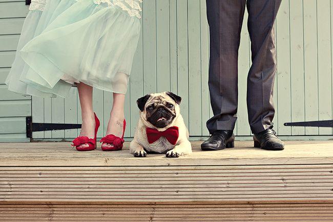casamento_animais_estimacao_cachorro_07