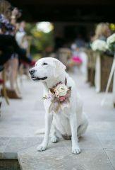 casamento_animais_estimacao_cachorro_08