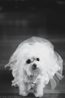 casamento_animais_estimacao_cachorro_10