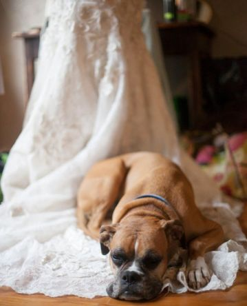 casamento_animais_estimacao_cachorro_11