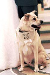 casamento_animais_estimacao_cachorro_12