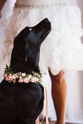 casamento_animais_estimacao_cachorro_13