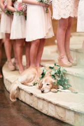casamento_animais_estimacao_cachorro_14