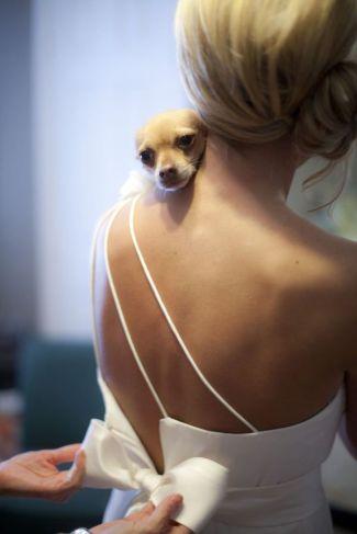 casamento_animais_estimacao_cachorro_16