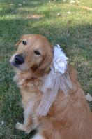 casamento_animais_estimacao_cachorro_18