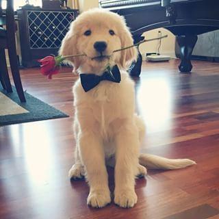 casamento_animais_estimacao_cachorro_19