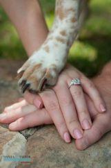 casamento_animais_estimacao_cachorro_alianca_02