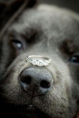 casamento_animais_estimacao_cachorro_alianca_03