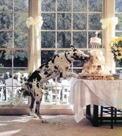 casamento_animais_estimacao_cachorro_bolo_01