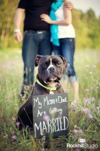 casamento_animais_estimacao_cachorro_daminha_pajem_01