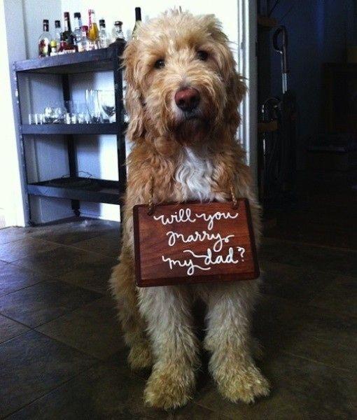 casamento_animais_estimacao_cachorro_pedido_01