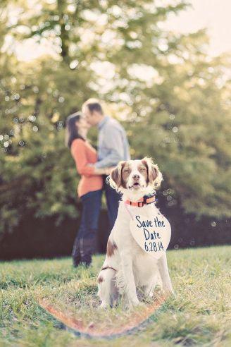 casamento_animais_estimacao_cachorro_save_the_date_01