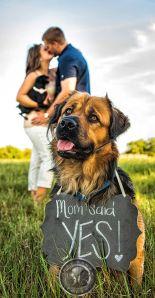 casamento_animais_estimacao_cachorro_save_the_date_02