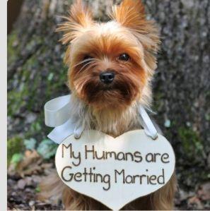casamento_animais_estimacao_cachorro_save_the_date_04