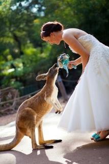 casamento_animais_estimacao_canguru_01