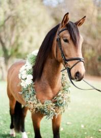 casamento_animais_estimacao_cavalo_01