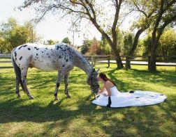 casamento_animais_estimacao_cavalo_03