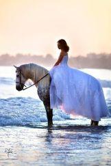 casamento_animais_estimacao_cavalo_04