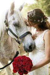 casamento_animais_estimacao_cavalo_05