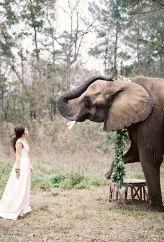 casamento_animais_estimacao_elefante_01