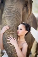 casamento_animais_estimacao_elefante_02