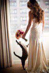 casamento_animais_estimacao_gato_04