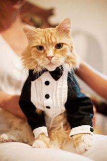 casamento_animais_estimacao_gato_06