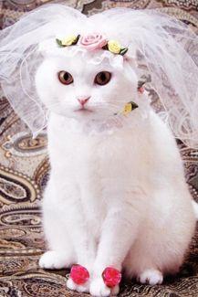 casamento_animais_estimacao_gato_09