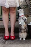 casamento_animais_estimacao_gato_12