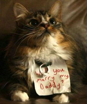 casamento_animais_estimacao_gato_pedido_01