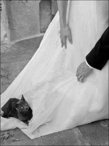 casamento_animais_estimacao_problemas_02