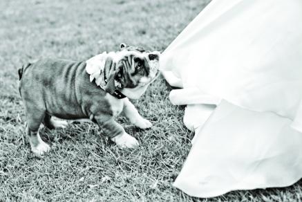 casamento_animais_estimacao_problemas_04