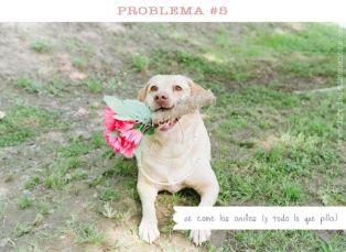 casamento_animais_estimacao_problemas_07