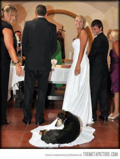 casamento_animais_estimacao_problemas_10